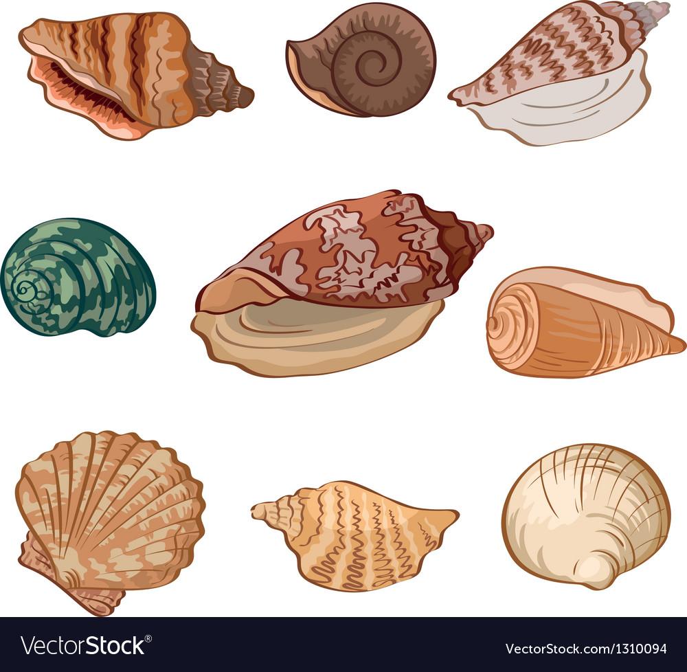 Set seashells vector