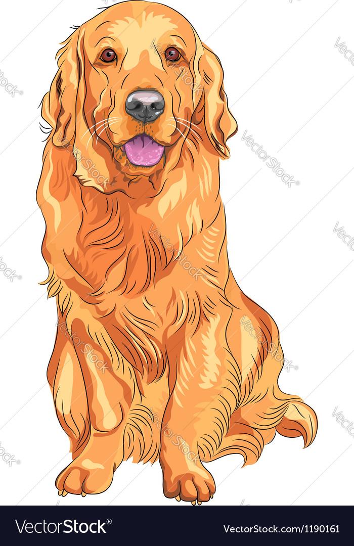 Smiling golden retriever gun dog vector