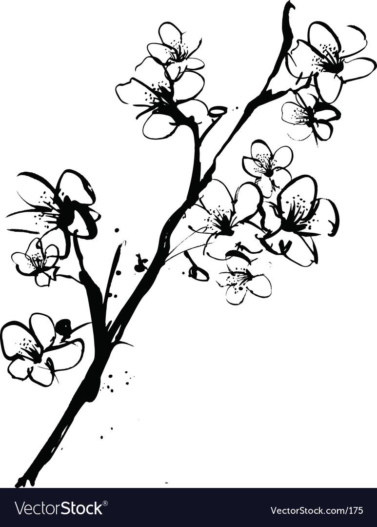 Cherry blossom ink illustration vector