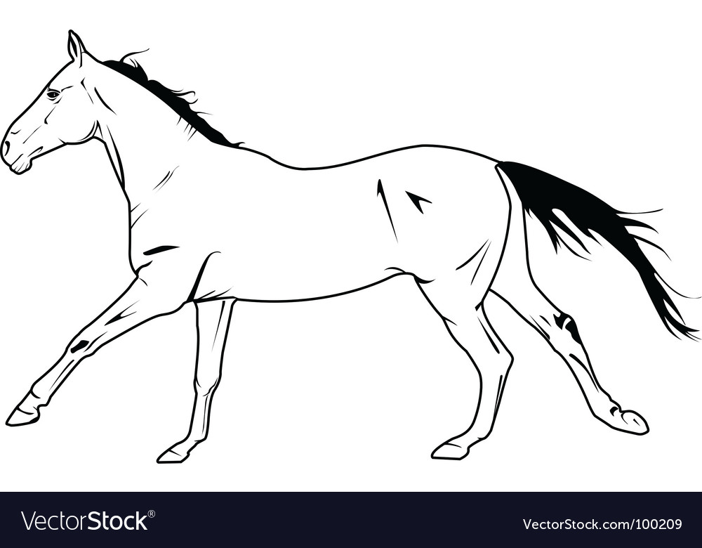 Stallion galloping vector