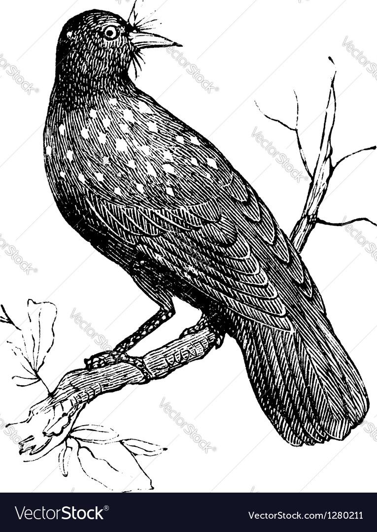 Nutcracker vintage engraving vector