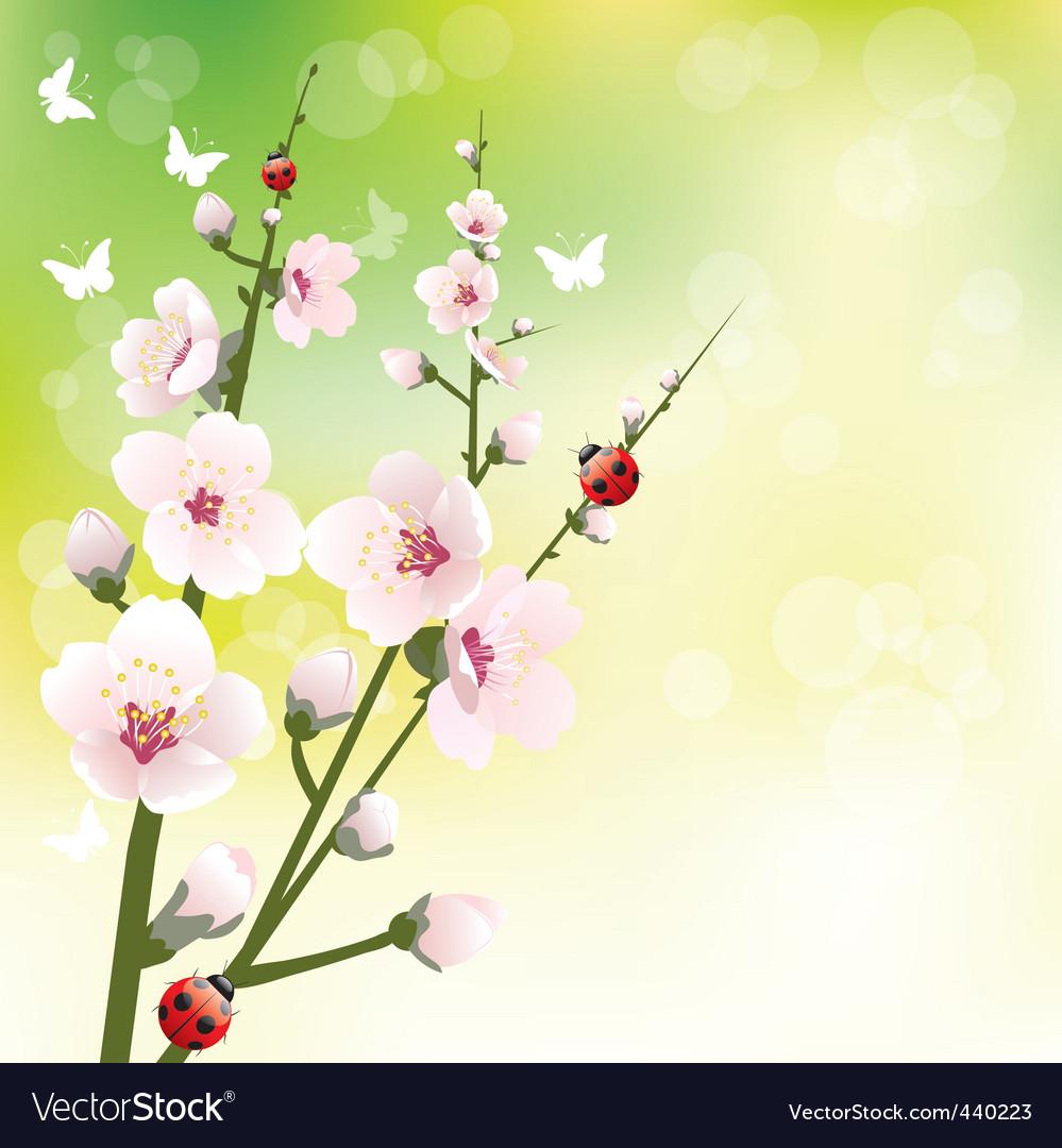 Spring blooming vector