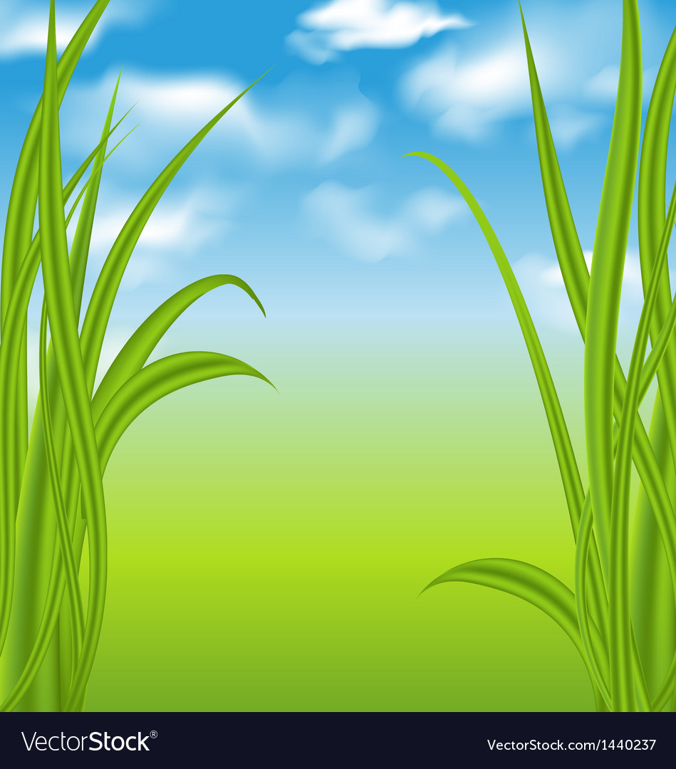 Nature background with green grass and sky vector