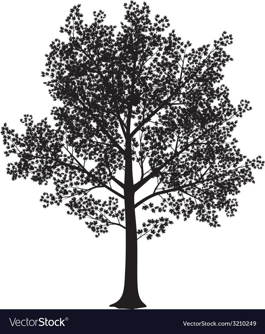 Maple silhouette vector