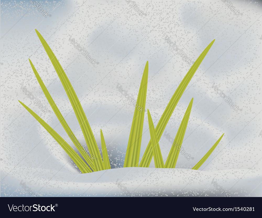 Green grass in snow vector