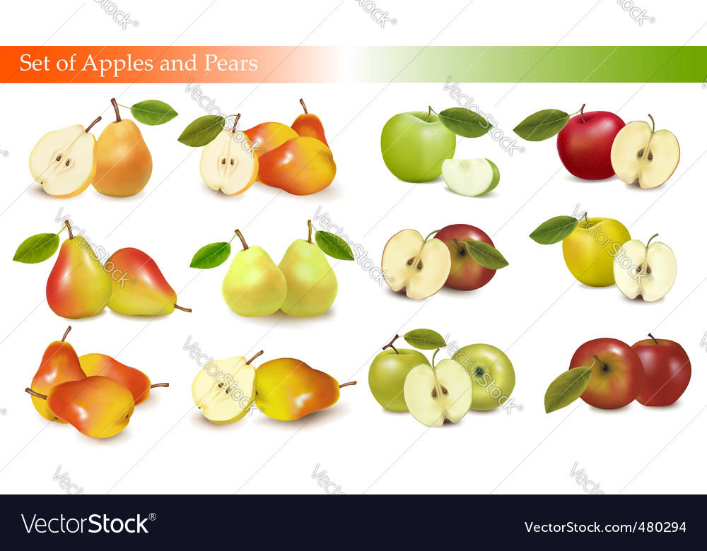 Set of pears and apples vector