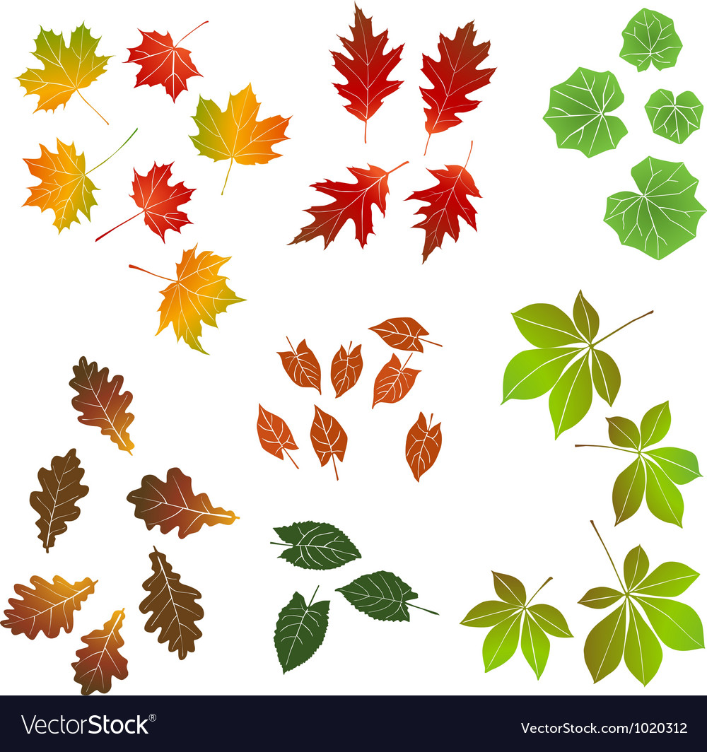 Autumn leaf collection for designers vector