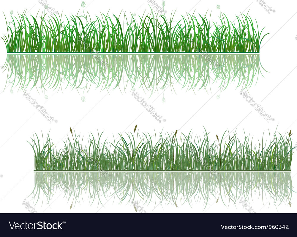 Green grass patterns with reflections vector