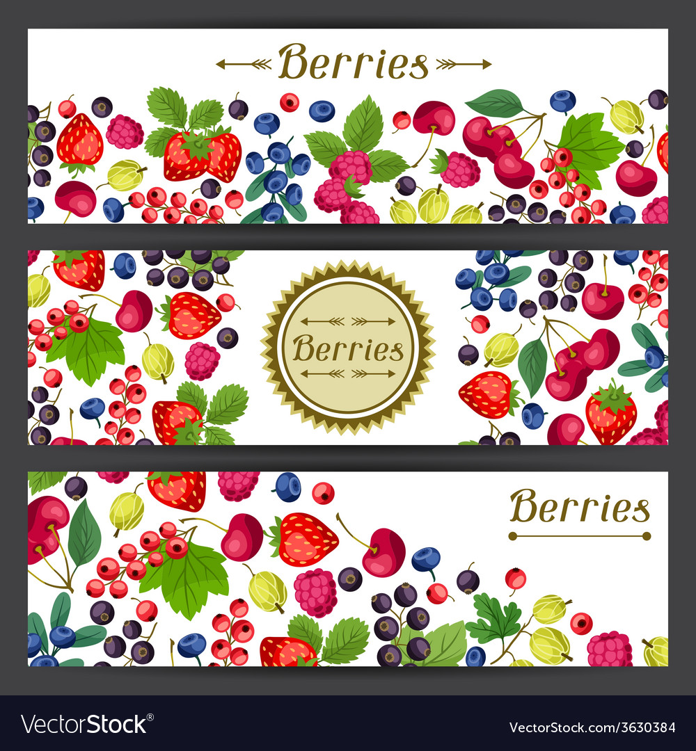 Nature banners design with berries vector