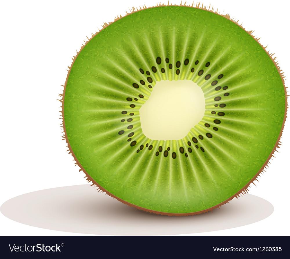 Fresh kiwi fruit slice vector