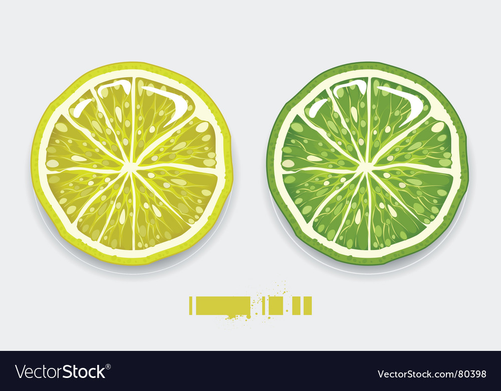 Lemon lime vector