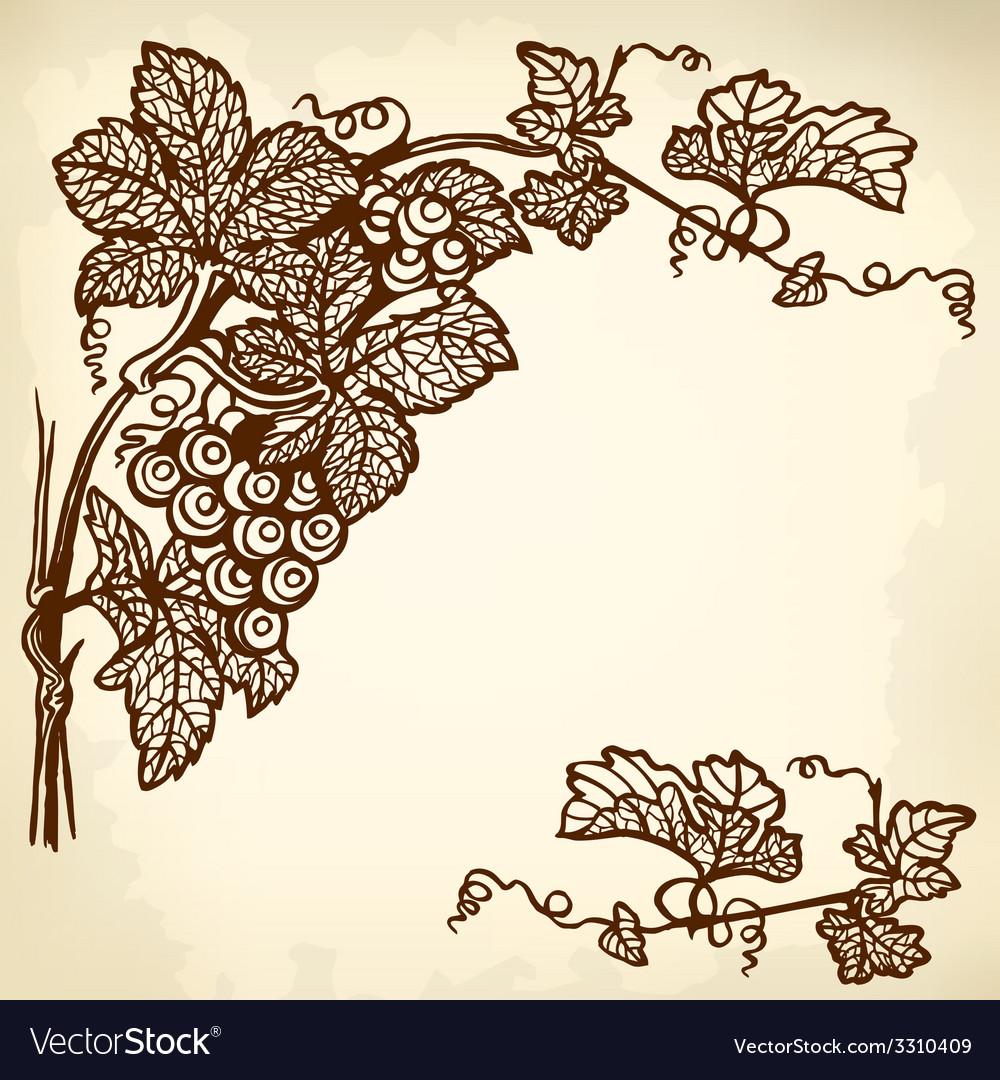 Grapes branch vector