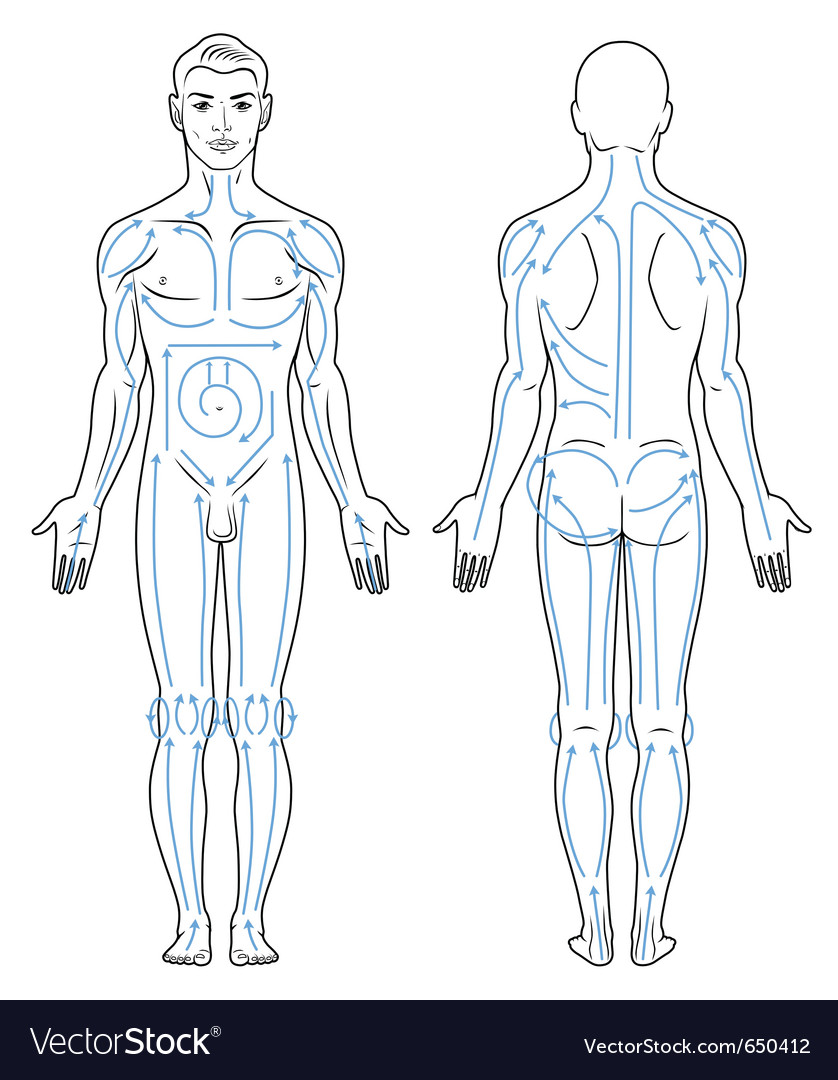 Facial and body massaging lines for man vector