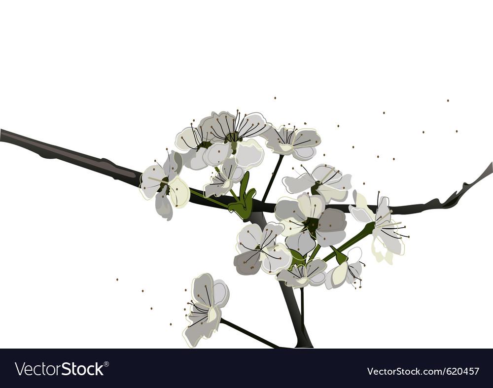 Vintage blossom vector