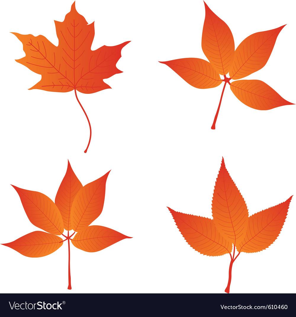 Orange leaves vector
