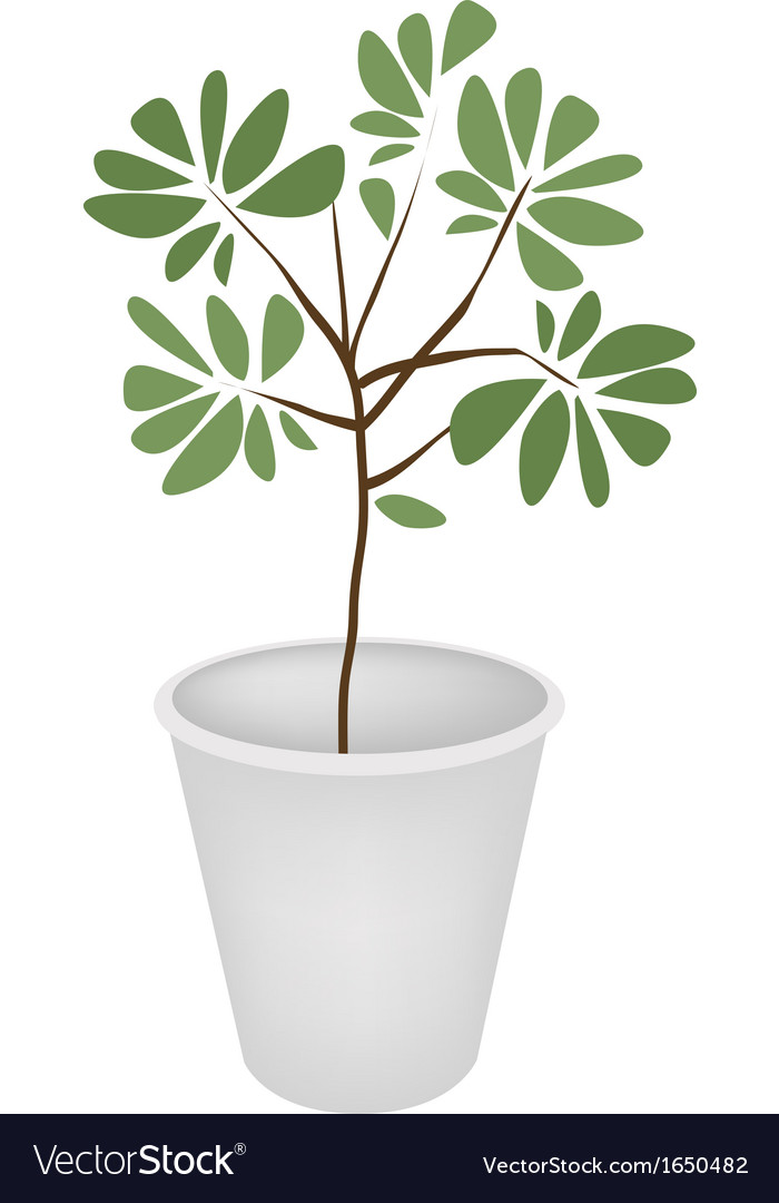 Green trees and plants in a flower pot vector
