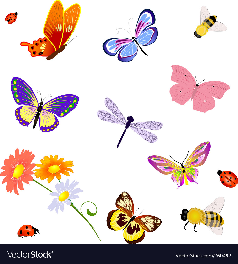 Butterfly insects bee ladybug vector