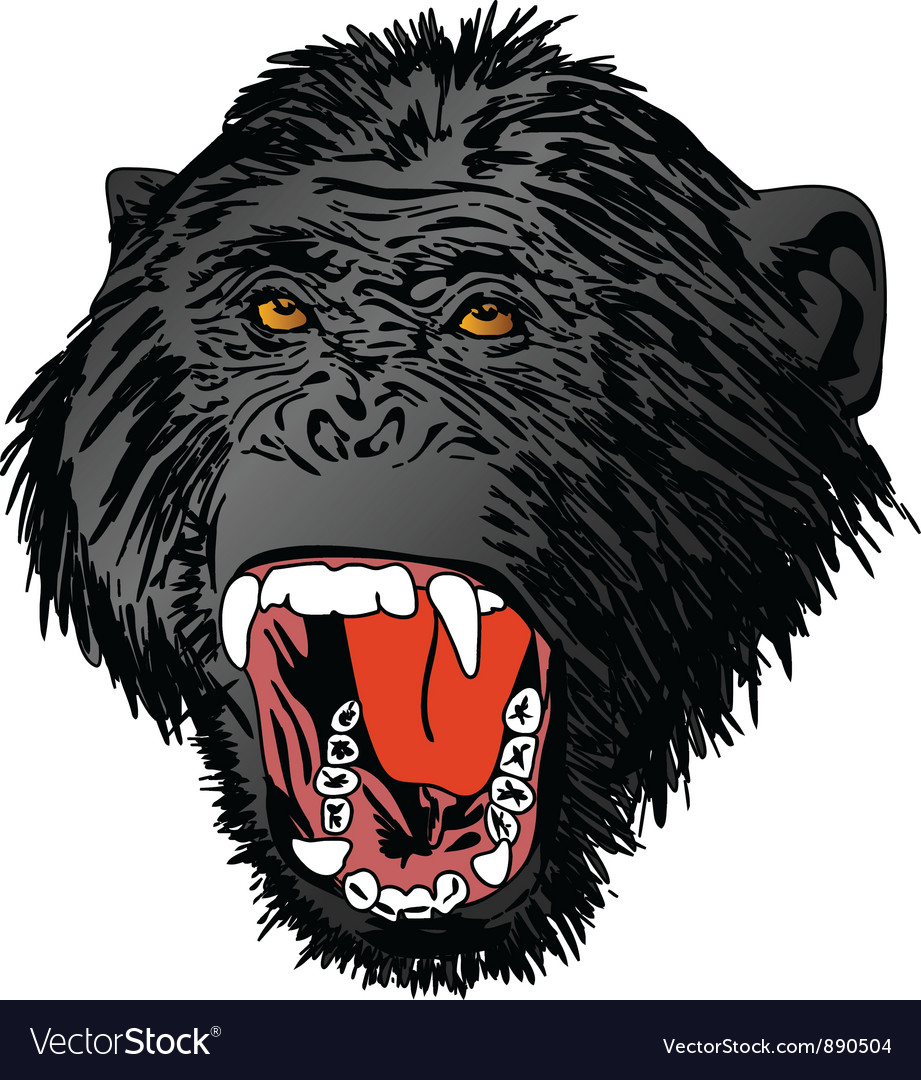 Angry ape monkey gorilla vector