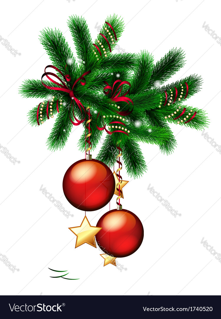 Branch of christmas tree vector