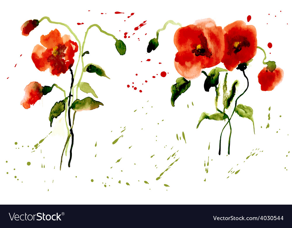 Flowers poppies red with splashes of watercolor vector