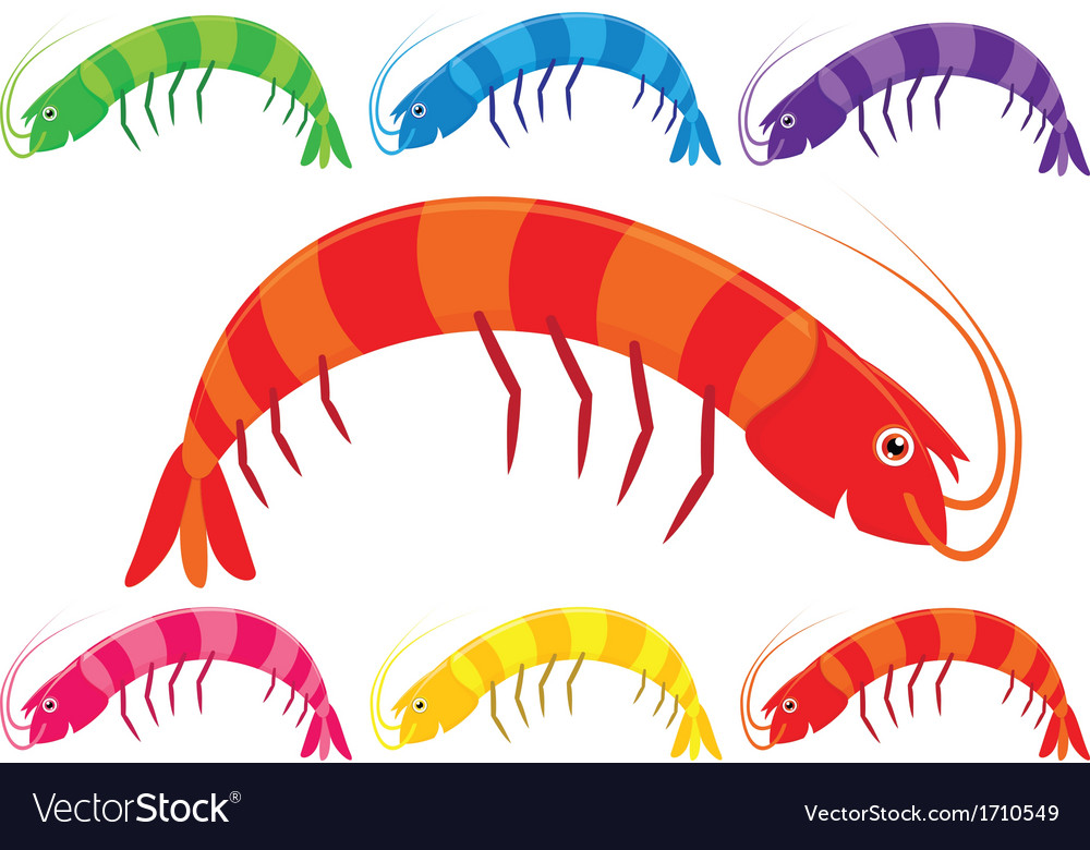 Cartoon prawns or shrimp in a variety of bright vector