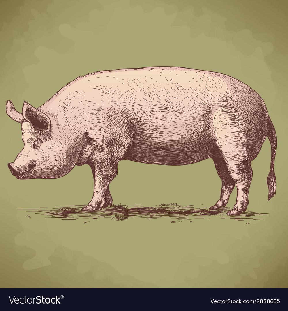 Engraving big pig retro vector