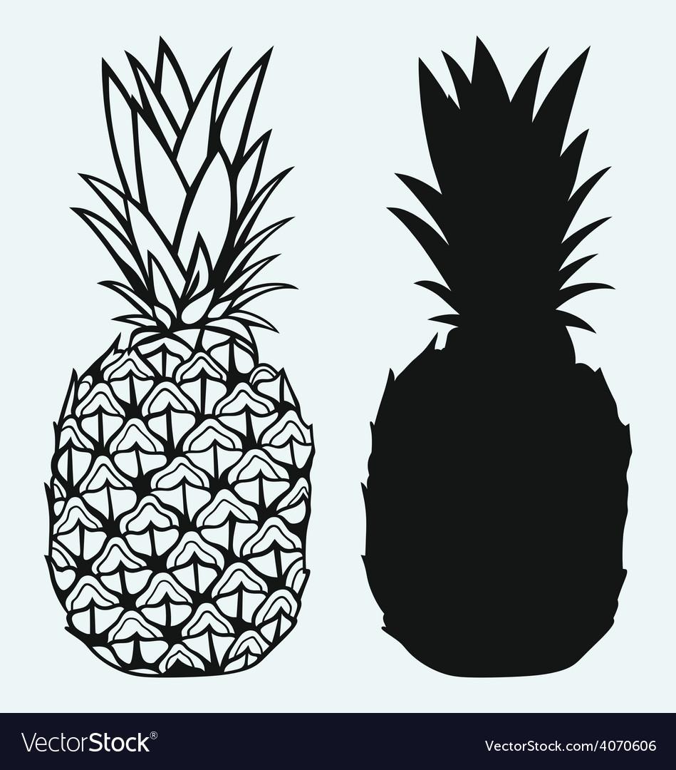 Ripe tasty pineapple vector