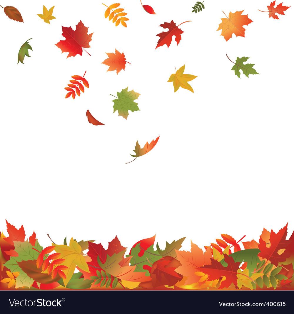 Autumn leaves vector