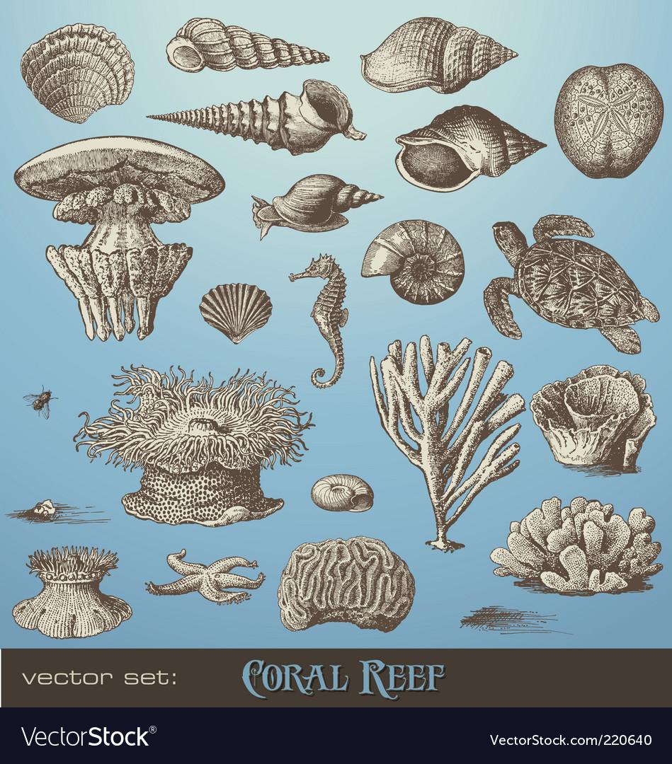 Coral reef vector