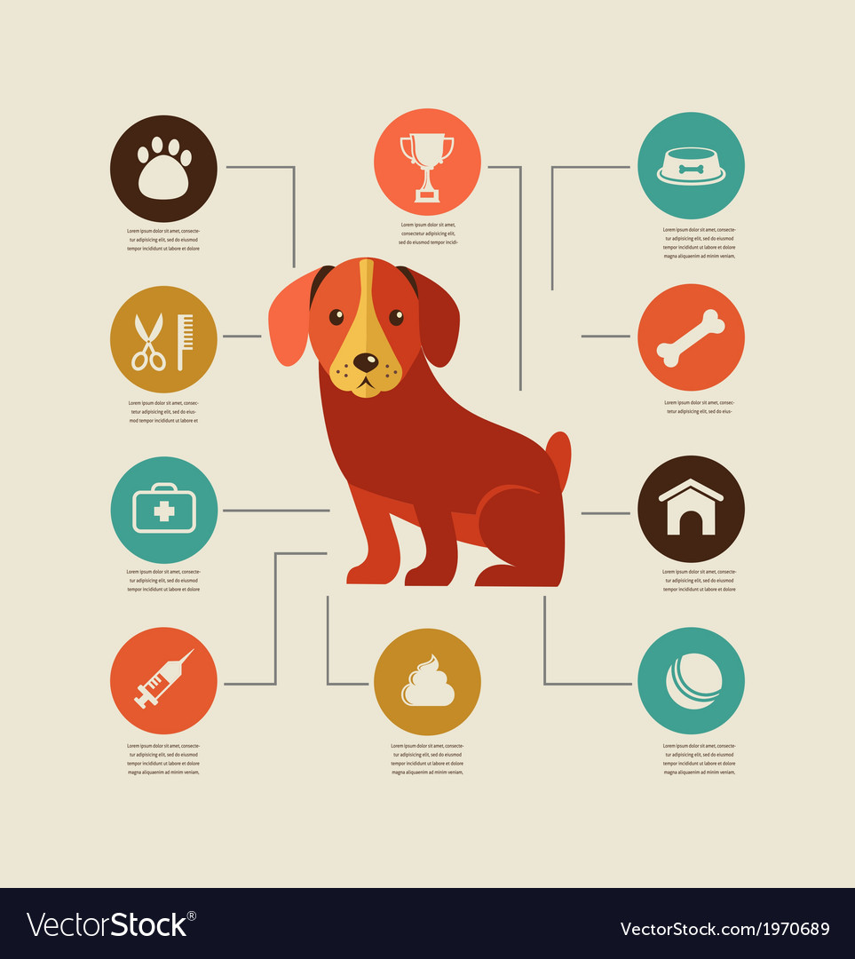 Dogs infographic and icon set vector