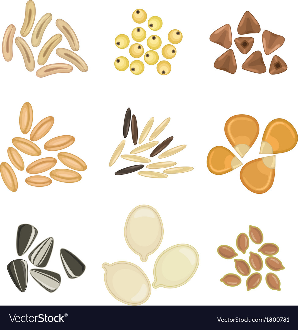 Cereals grains icon set vector