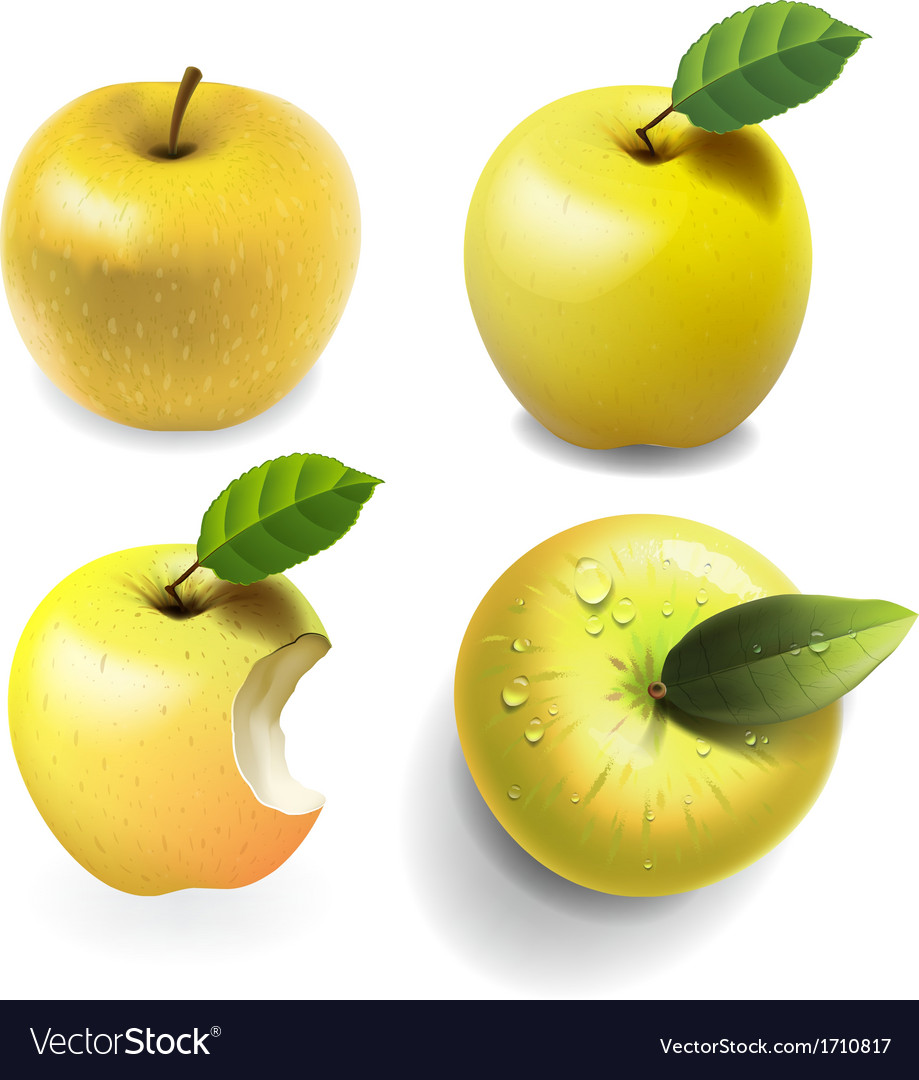 Set of yellow ripe apples four various view vector