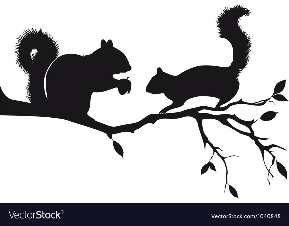 Squirrels on tree branch vector