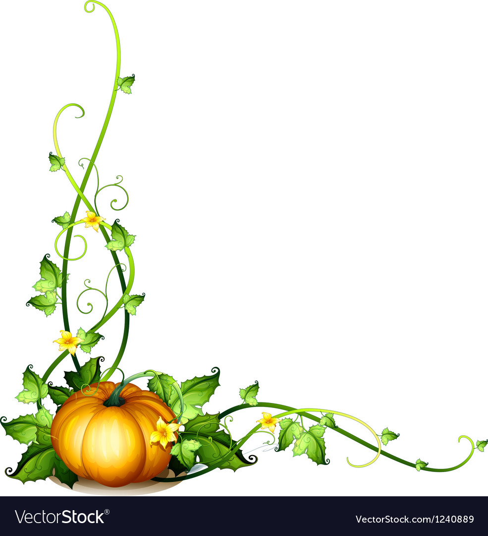 A pumpkin vine decor vector