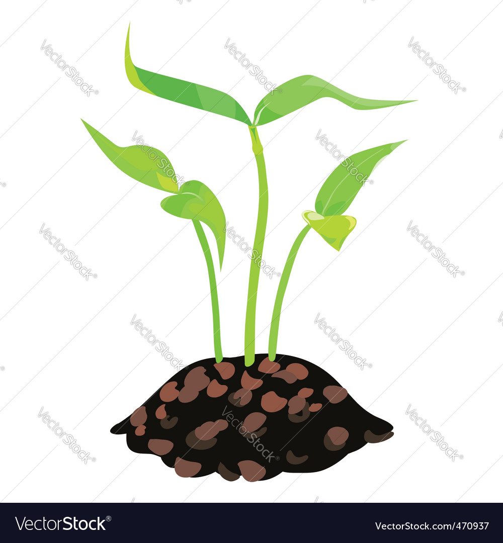 Green sprouts in the land vector