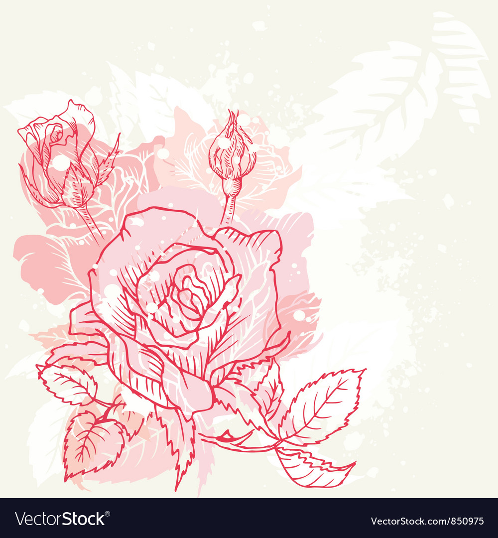 Floral roses background vector