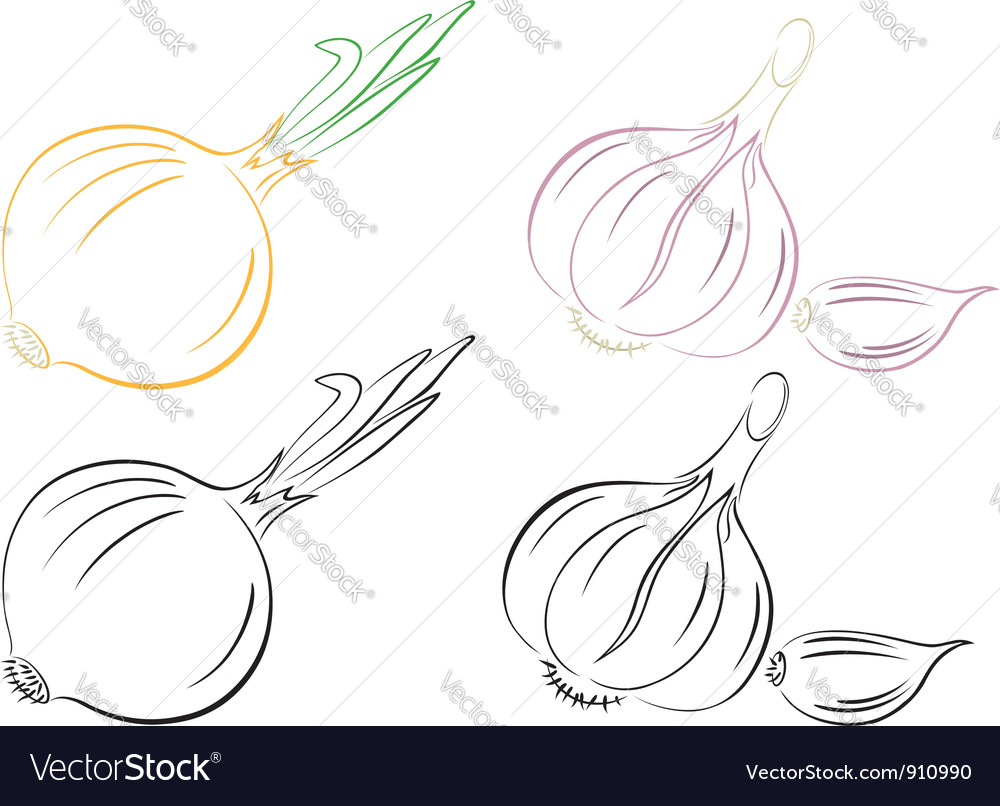 Garlic and onions vector
