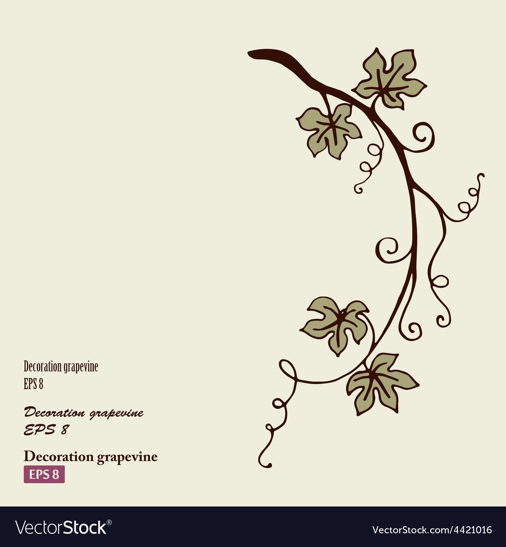 Decoration grape vine vector