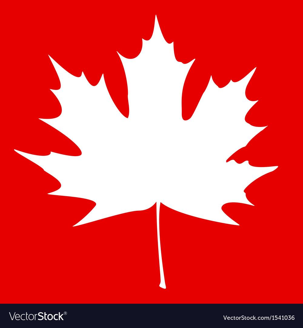 Maple leaf white vector
