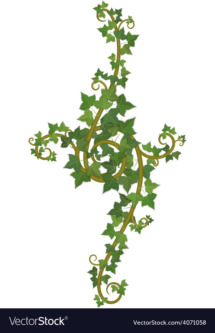 Ivy branch decor vector