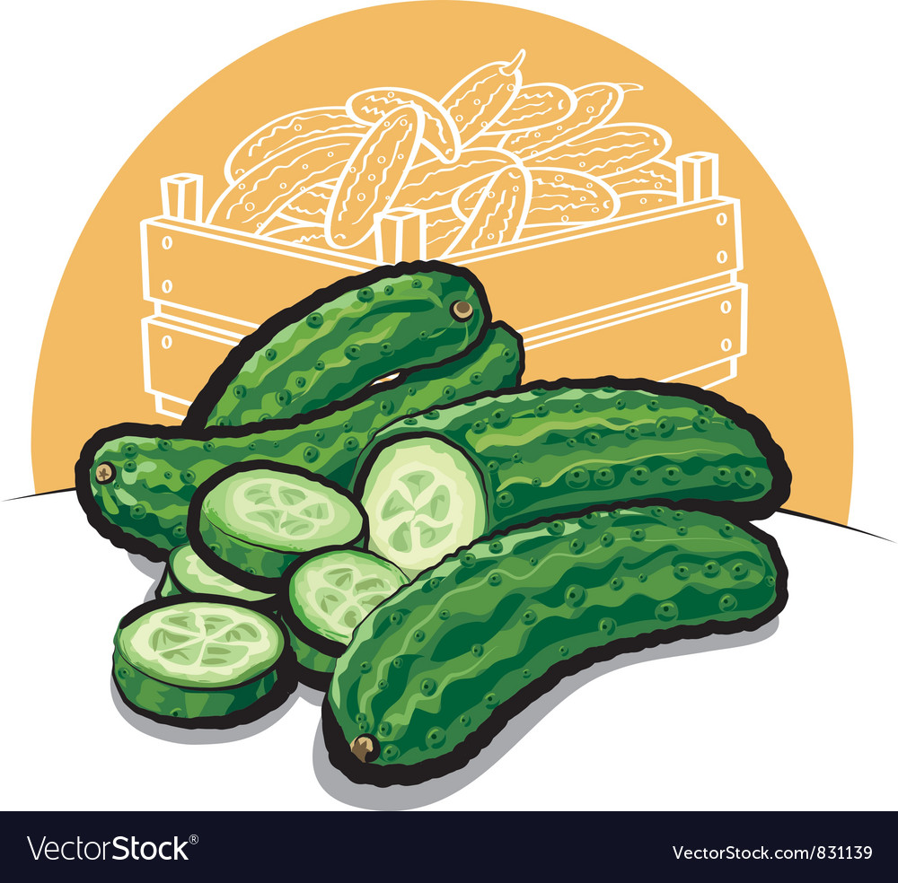 Fresh cucumbers vector