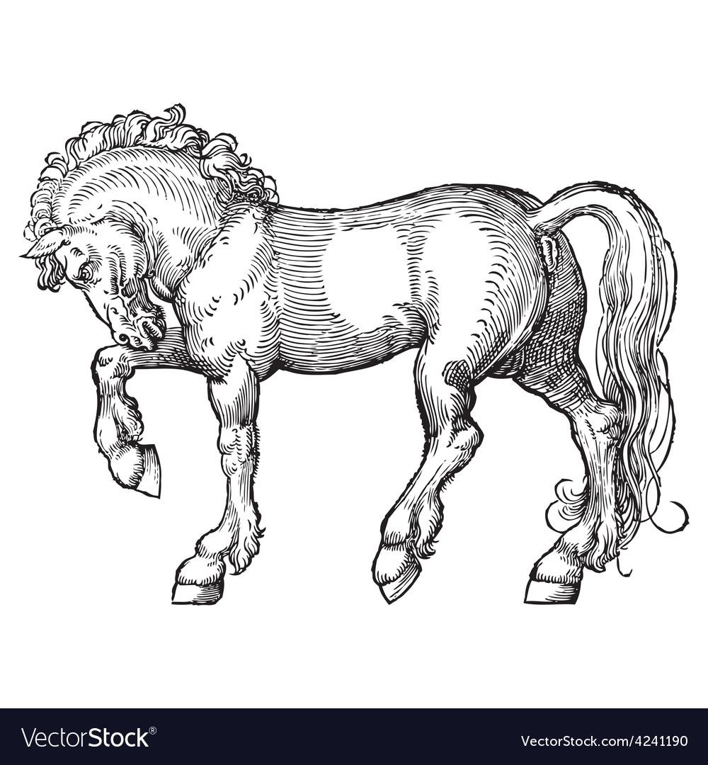 Horse engraving vector