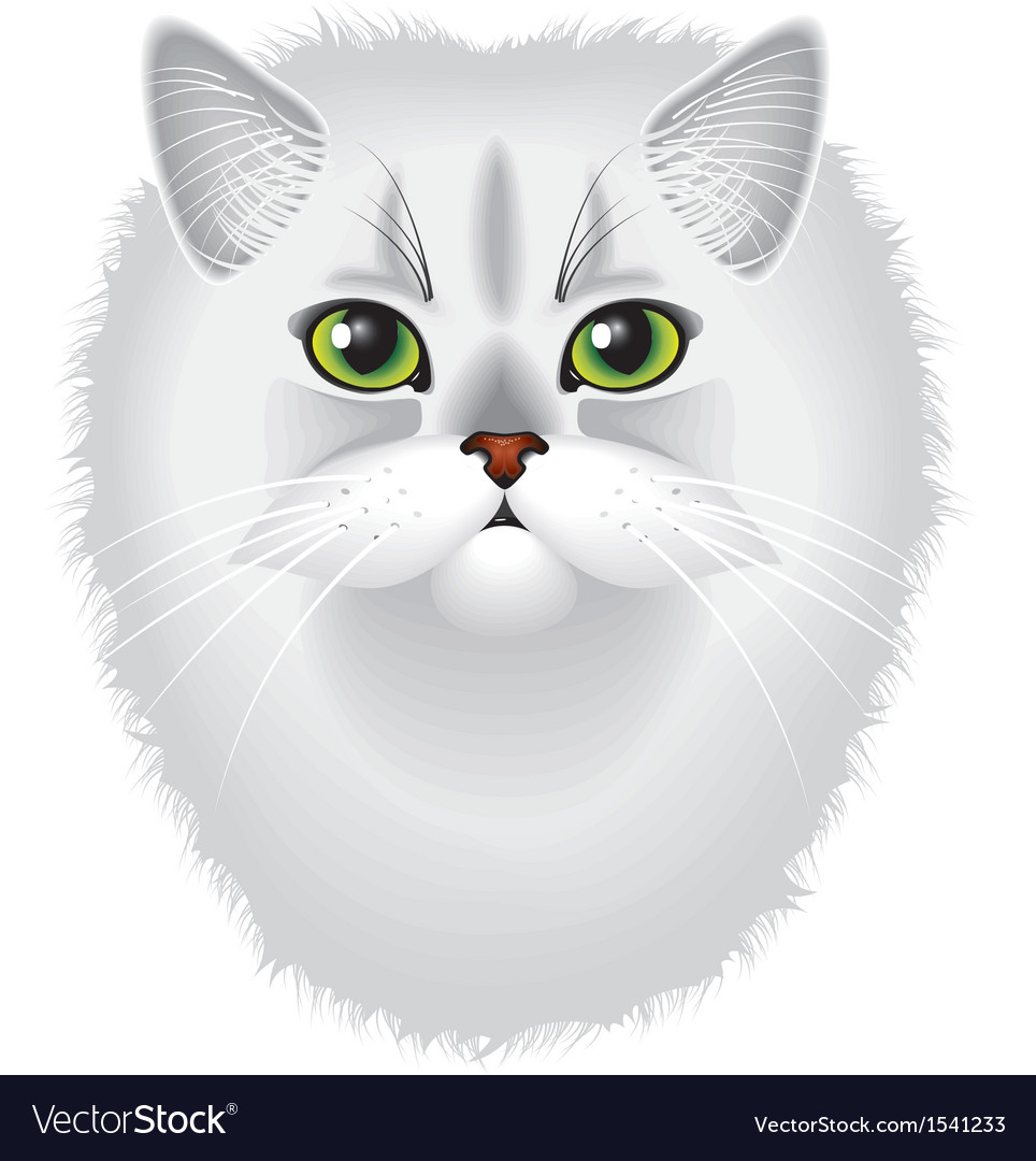 Cat chinchilla vector