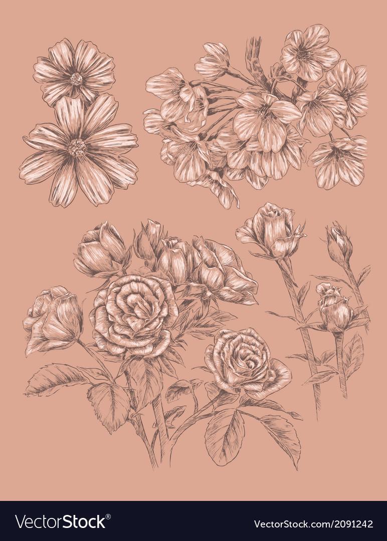 Detailed sketchbook hand drawn flower set vector