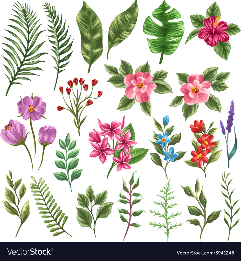 Collection of flowers and leaves vector