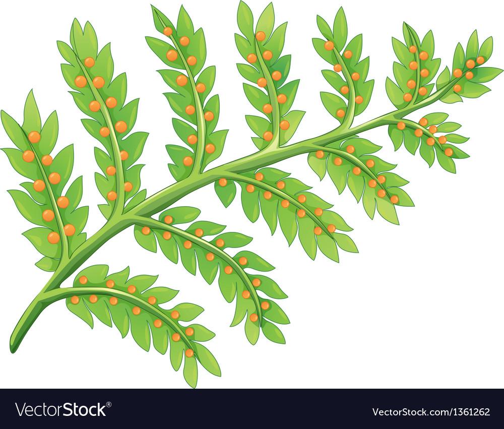 Fern plant vector