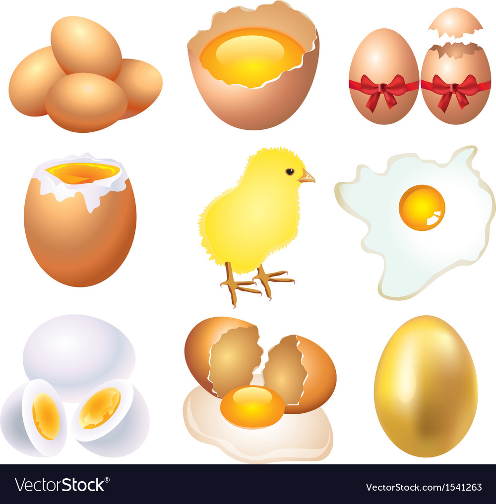 Eggs set vector