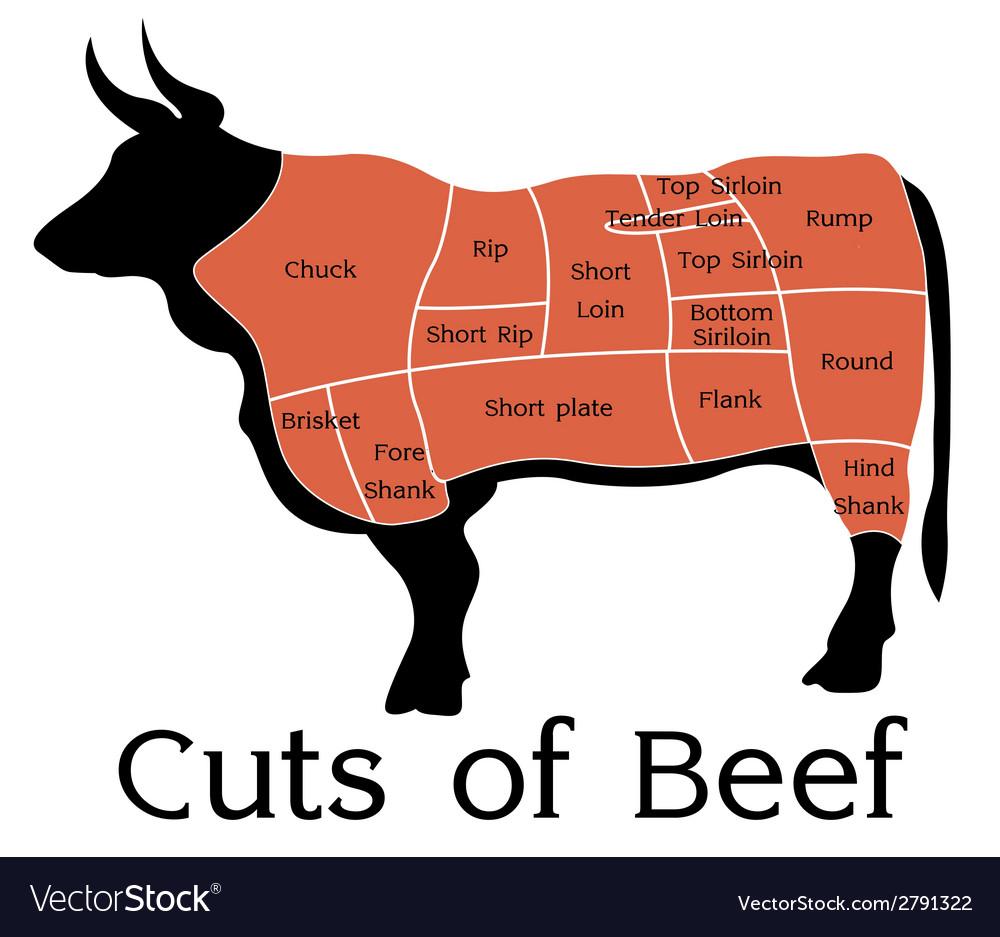 Cuts of beef vector