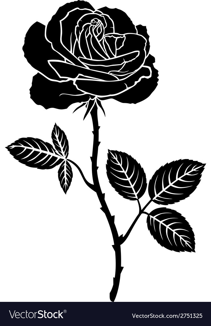 Rose leaves vector
