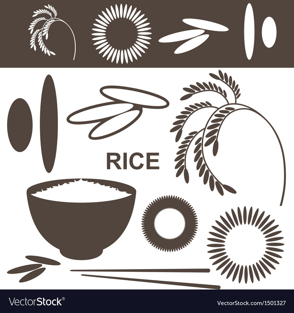 Rice set vector